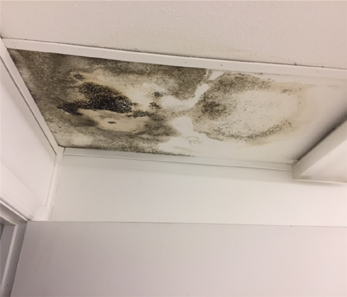 Mold Found Throughout City Portable Trailer
