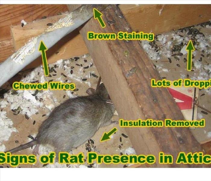 Rodent Infestation Cleanup Servpro Of Hampton North